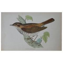 Original Antique Bird Print, the Thrush Nightingale, circa 1850