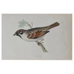 Original Antique Bird Print, The Tree Sparrow, circa 1850
