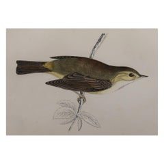 Original Antique Bird Print, the Willow Warbler, circa 1870