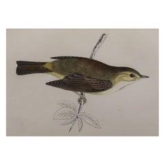Original Antique Bird Print, the Willow Warbler, circa 1870