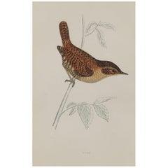 Original Antique Bird Print, the Wren, circa 1870