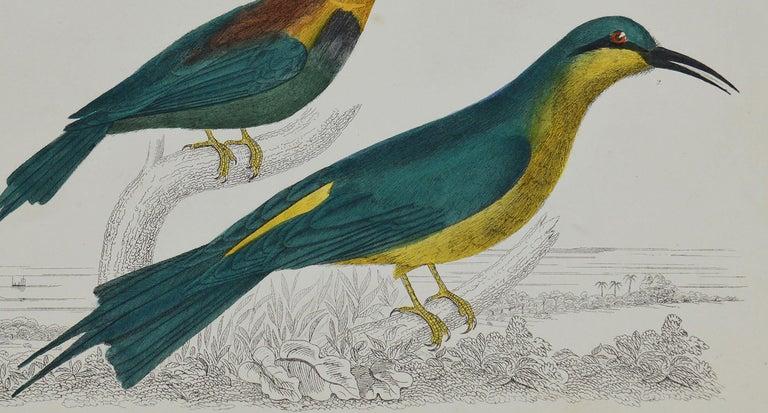Folk Art Original Antique Print of a Bee-Eater, 1847 'Unframed' For Sale