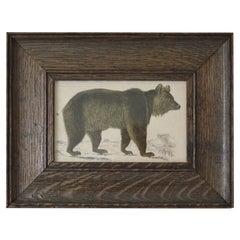 Original Antique Print of a Brown Bear, 1847