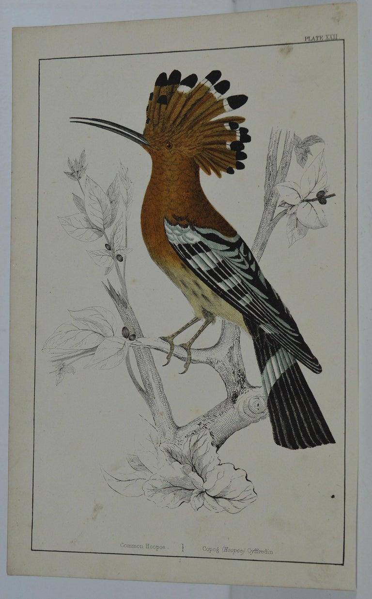 Folk Art Original Antique Print of a Hoopoe, 1847 'Unframed' For Sale