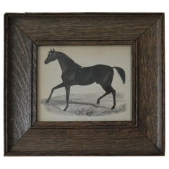 Original Antique Print of a Horse, 1847