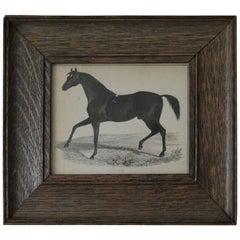 Original Antique Print of a Horse, 1847