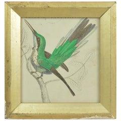 Original Antique Print of a Hummingbird, 1847