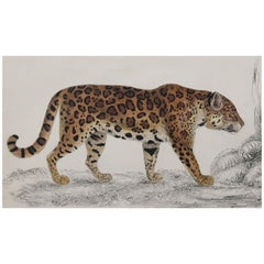 Original Antique Print of a Jaguar, 1847 'Unframed'