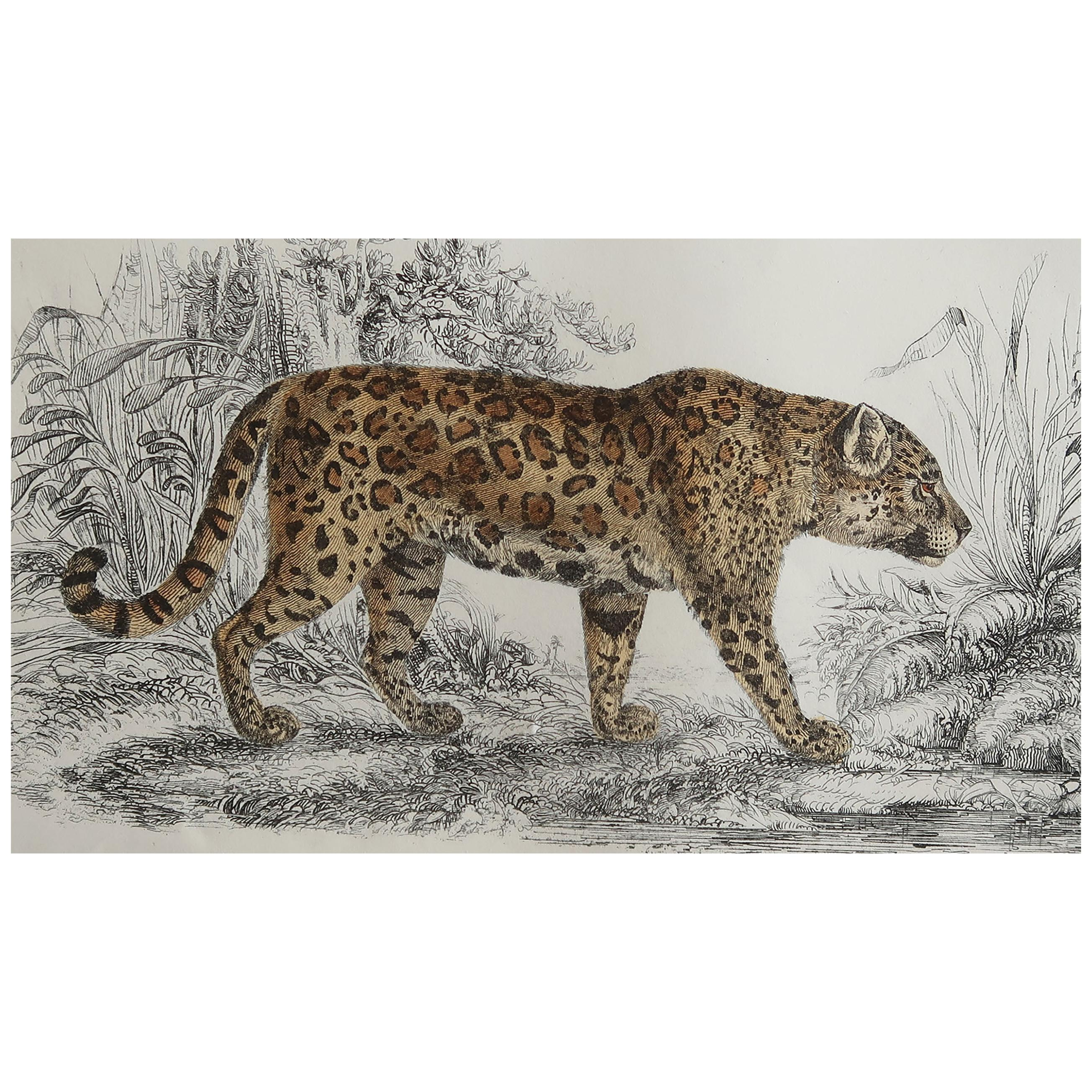 Original Antique Print of a Jaguar, 1847 'Unframed'