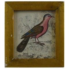 Original Antique Print of a Red Bird, 1847