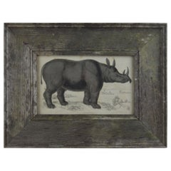 Original Antique Print of a Rhinoceros, 1830s
