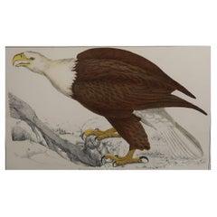 Original Antique Print of an Eagle, 1847 'Unframed'