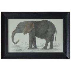 Original Antique Print of an Elephant, 1847
