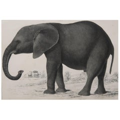 Original Antique Print of an Elephant, 1847 'Unframed'