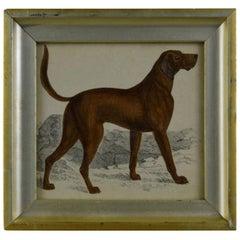 Original Antique Print of an English Sporting Dog, 1847