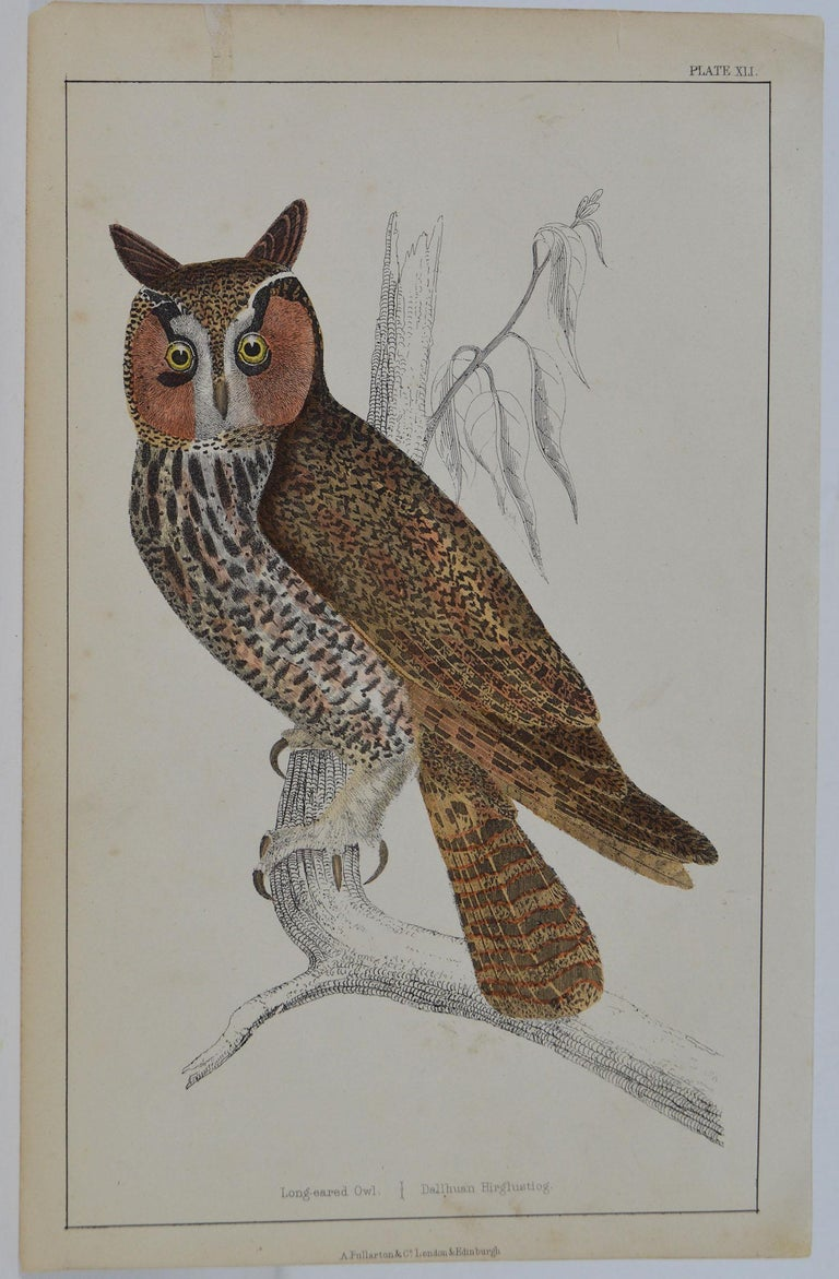 Great image of an owl  Unframed. It gives you the option of perhaps making a set up using your own choice of frames.  Lithograph after Cpt. Brown with original hand color.  Published 1847.  Free shipping.
