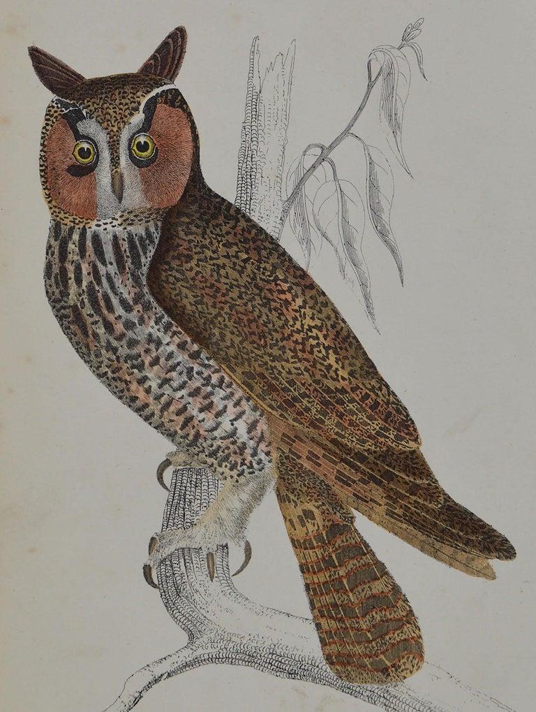 Folk Art Original Antique Print of an Owl, 1847 'Unframed' For Sale