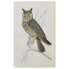 Original Antique Print of an Owl, 1847 'Unframed'