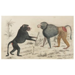 Original Antique Print of Baboons, 1847 'Unframed'