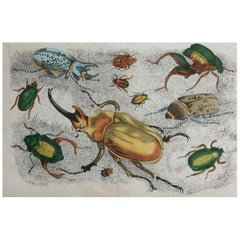 Original Antique Print of Beetles, 1847 'Unframed'