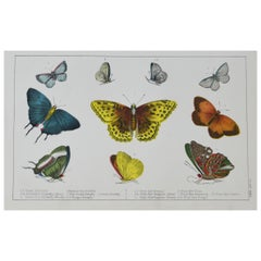 Original Antique Print of Butterflies, 1847 'Unframed'
