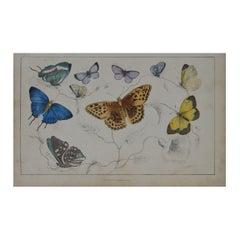 Original Antique Print of Butterflies, 1847 'Unframed'