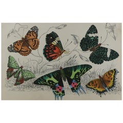 Original Antique Print of Butterflies, circa 1850, Unframed