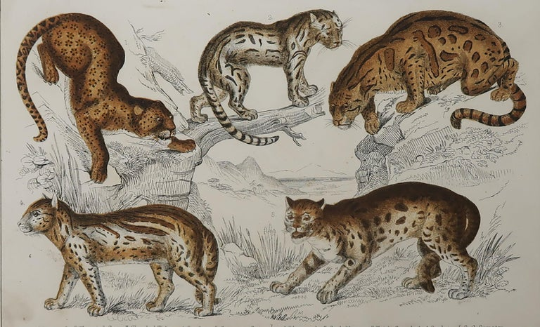 Great image of cats.
