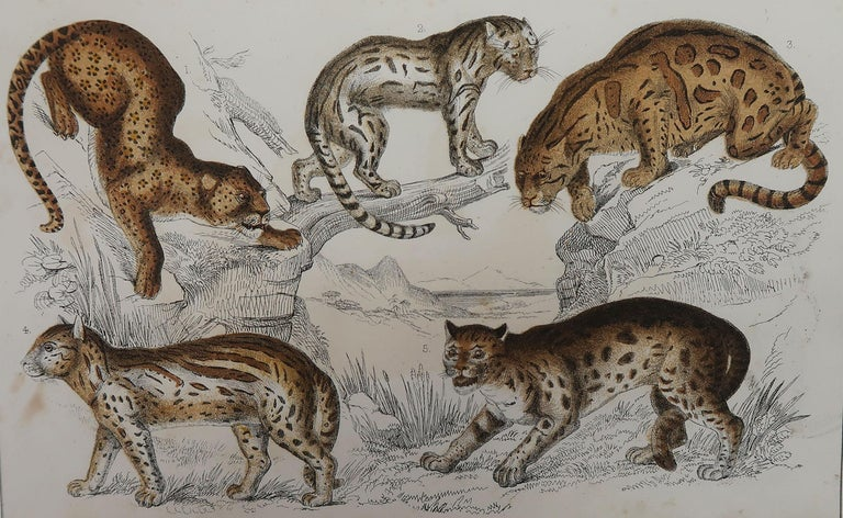 Great image of cats.  Unframed. It gives you the option of perhaps making a set up using your own choice of frames.  Lithograph after Cpt. brown with original hand color.  Published, 1847.  Free shipping.