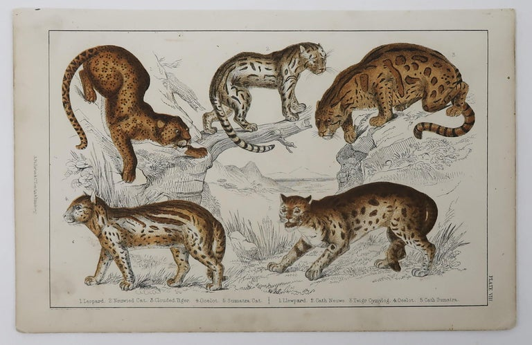 Folk Art Original Antique Print of Cats, 1847 'Unframed' For Sale