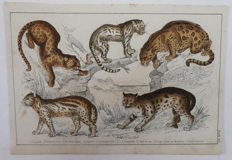 Folk Art Original Antique Print of Cats, 1847 'Unframed' For Sale