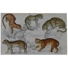Original Antique Print of Cats, 1847 'Unframed'