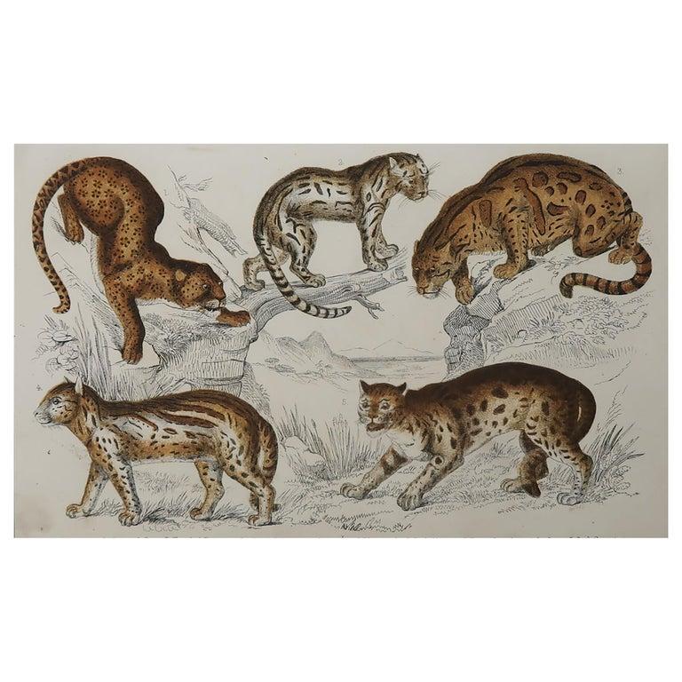 Original Antique Print of Cats, 1847 'Unframed' For Sale