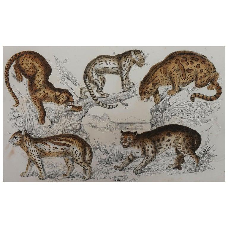 Original Antique Print of Cats, 1847 'Unframed' For Sale