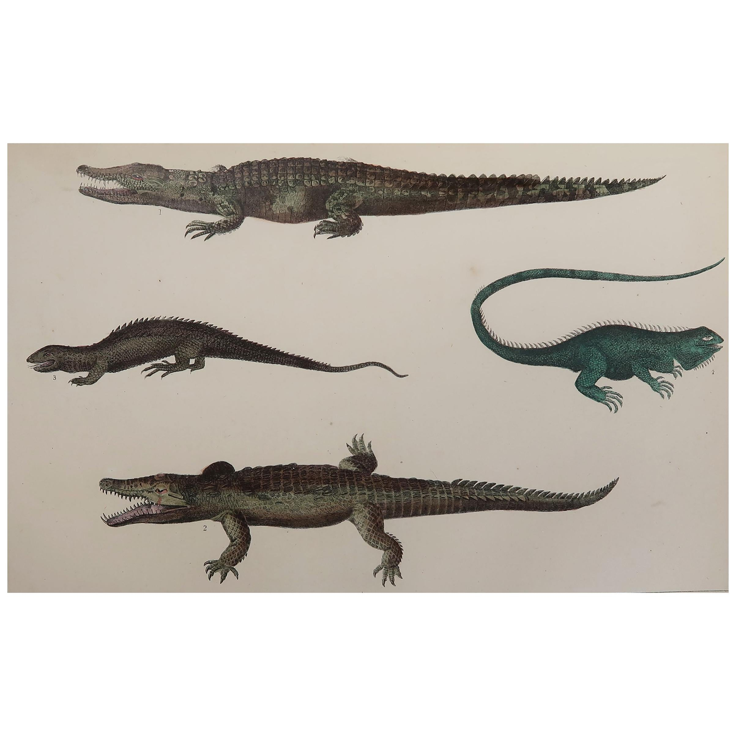 Original Antique Print of Crocodiles, 1847 'Unframed'