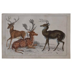 Original Antique Print of Deer, 1847 'Unframed'