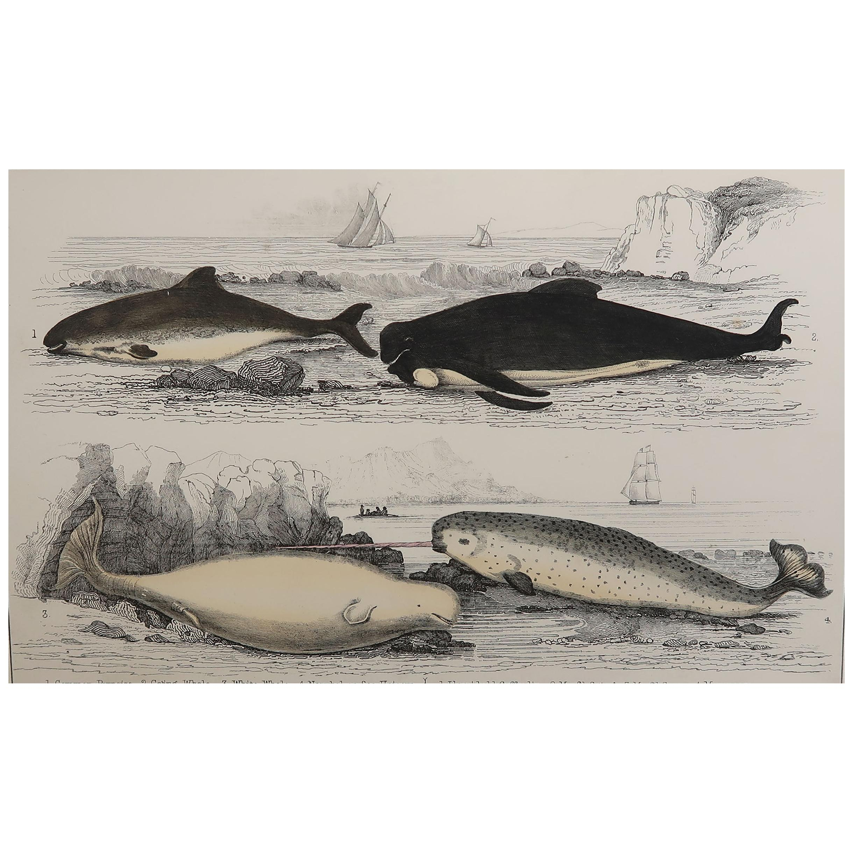 Original Antique Print of Dolphins, 1847 'Unframed'