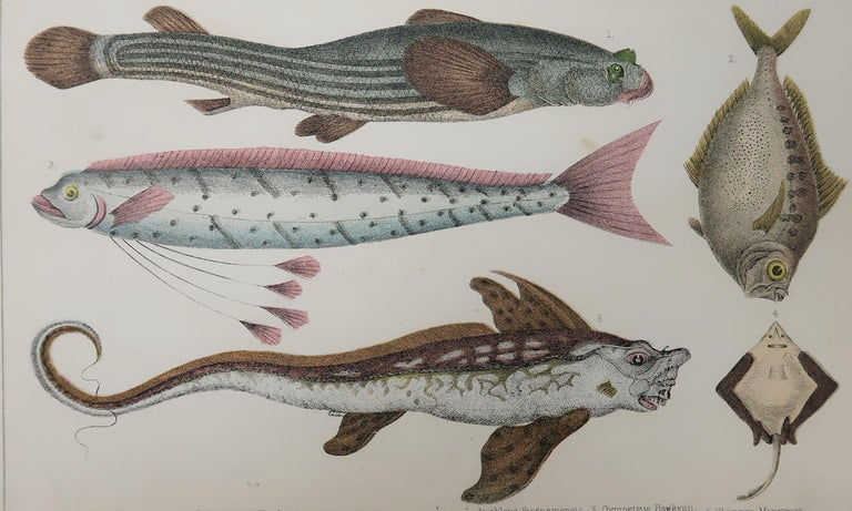 Great image of fish.