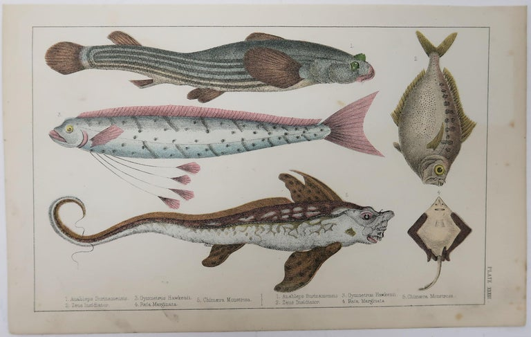 Folk Art Original Antique Print of Fish, 1847 Unframed For Sale
