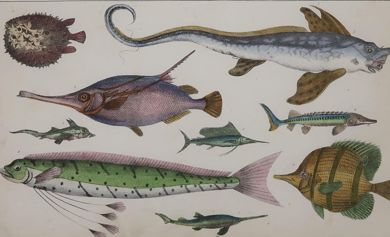 Folk Art Original Antique Print of Fish, 1847 'Unframed'