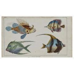 Original Antique Print of Fish, 1847 'Unframed'
