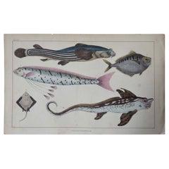 Original Antique Print of Fish, 1847 Unframed