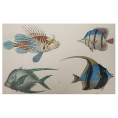 Original Antique Print of Fish, 1847 'Unframed'