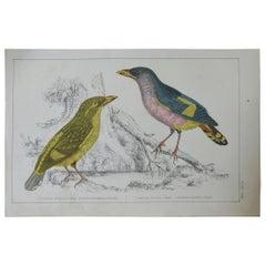 Original Antique Print of Horsefields, 1847 'Unframed'