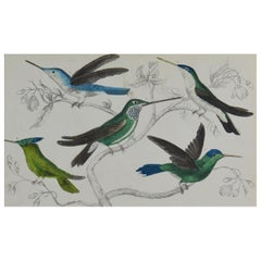 Original Antique Print of Hummingbirds, 1847 Unframed