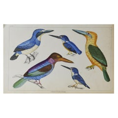Original Antique Print of Kingfishers, 1847 'Unframed'