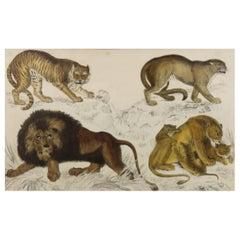 Original Antique Print of Lions, 1847 'Unframed'