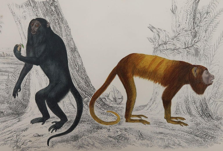 Great image of monkeys.