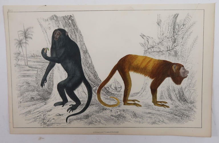 Folk Art Original Antique Print of Monkeys, 1847 'Unframed' For Sale