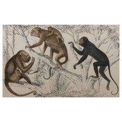 Original Antique Print of Monkeys, 1847 'Unframed'